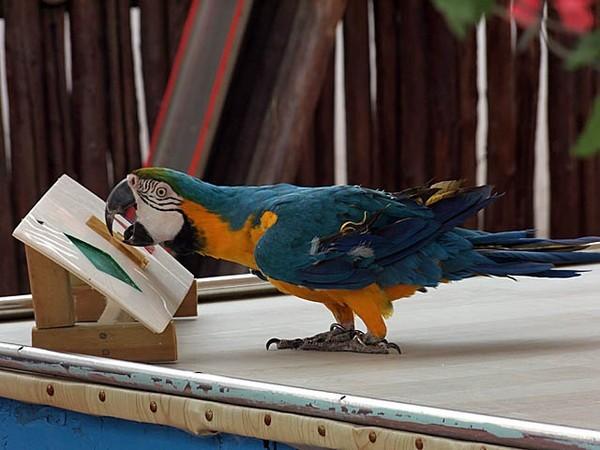 鹦鹉拼图-北京野生动物园-zol相册
